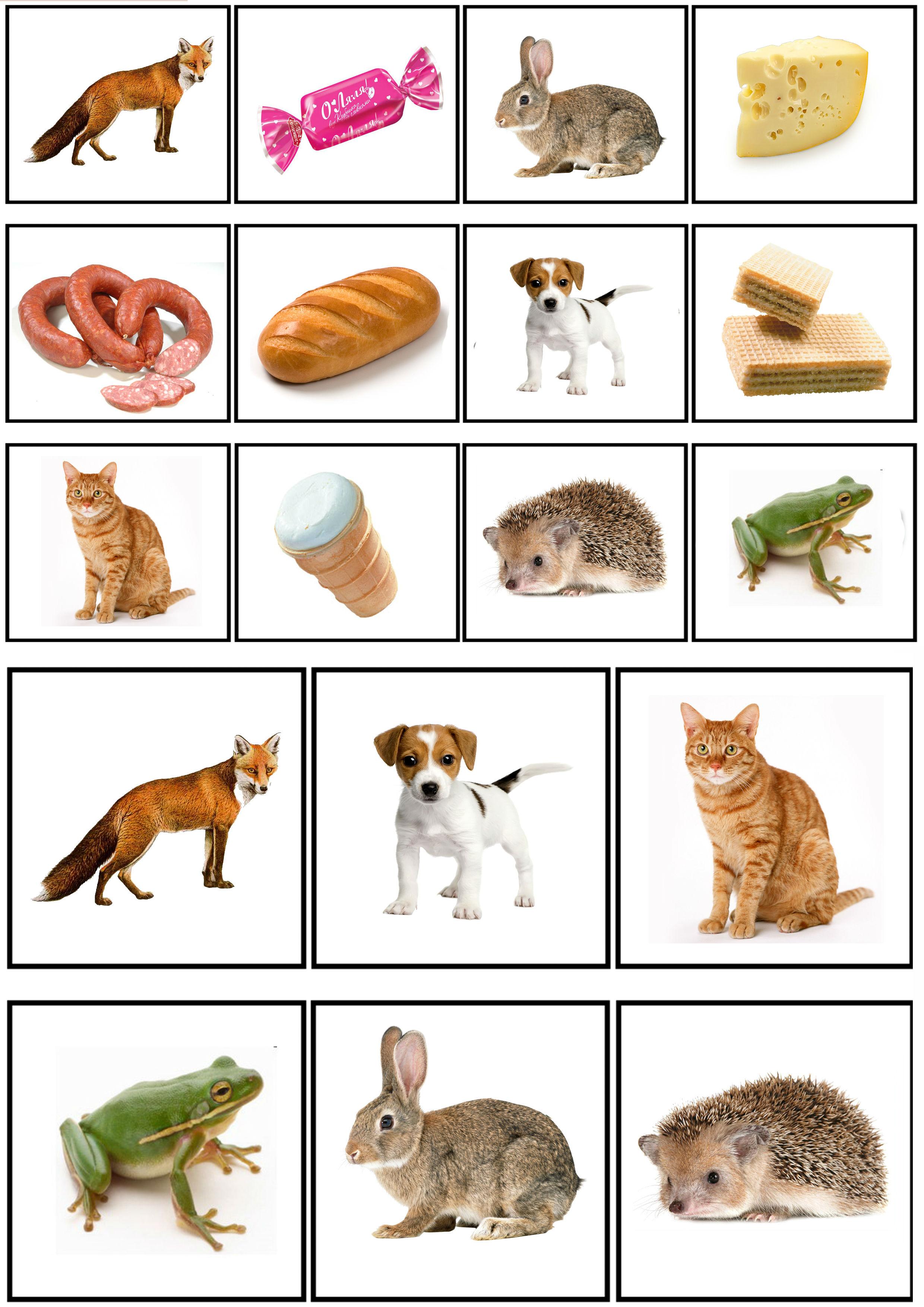 Картинка что едят дикие животные